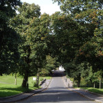 Mid Road through the trees